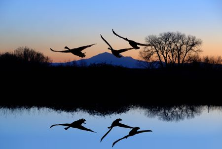winter sunrise: Reflected Riparian Tree and Canadian Geese in Evening Blue Stock Photo