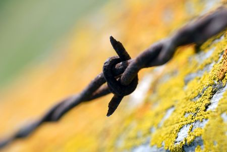 Selective focus of rusty barbed wire macro on range pasture with rust colored lichen photo