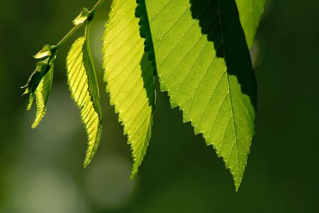 Detail of Spring Green Leaves Stock Photo - 3399072