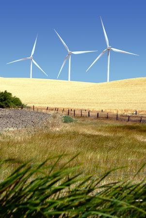 energies: Power generating wind turbines on cultivated, wheat covered hills, behind cattle pasture, Rio Vista California.