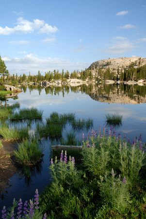 emigrant: Sierra Nevada trees, lupines, and granite dome reflected in wilderness lake (Wire Lake, twelve mile backpack into Emigrant Wilderness) Stock Photo