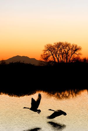 composure: Evening silhouette of Canadian Geese, tree, and mountain, reflected in wildlife pond, San Joaquin Delta, California Stock Photo