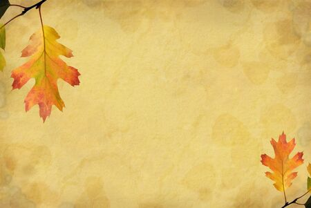 Grunge paper background with muted red and yellow autumn oak leaves and copy space Stock Photo - 3870480