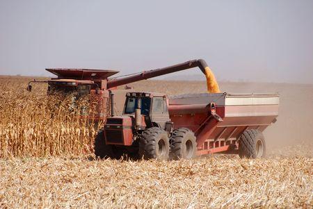 Combine harvesting corn, San Joaquin Valley, California