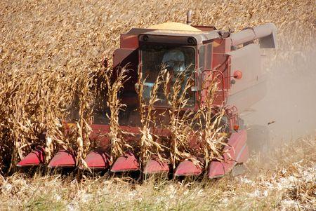 san joaquin: Combine harvesting corn, San Joaquin Valley, California