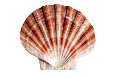 Seashell macro Banco de Imagens
