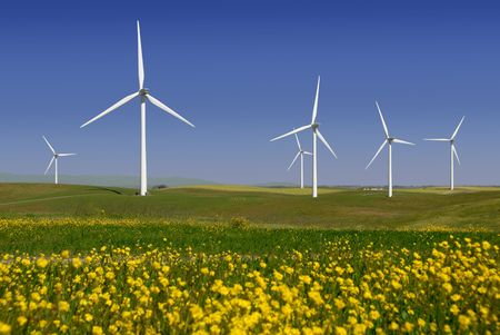 wildflowers: Stark White Electrical Power Generating Windmills, Turbines on Rolling Hills of Green Wheat and Yellow Wildflowers, Rio Vista, California