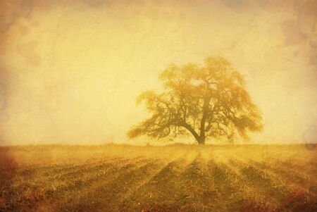 san joaquin valley: Grunge sepia oak tree in Winter fog, intentionally aged antique look, cultivated farm land in foreground with fog in furrows