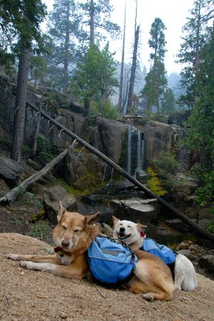red heeler: Two happy dogs with backpacks paused while hiking on a mountain trai, waterfall in background.l.