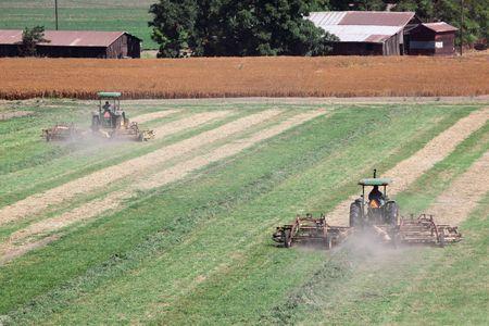 california delta: Tractors raking cut alfalfa in preparation for bailing. Stock Photo