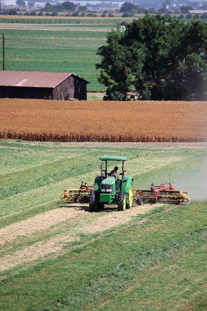california delta: Tractor raking cut alfalfa in preparation for bailing, corn in background.. Editorial