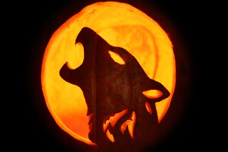 Silhouette of Halloween pumpkin carved into howling wolf pattern Jack O Lantern. Stock Photo