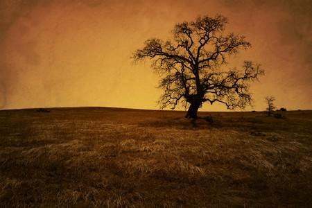 san joaquin valley: Silhouette of bare oak tree in Winter, antique grunge, artificially aged, San Joaquin Valley, California..