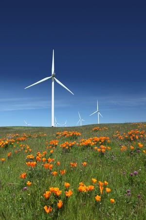 Stark white power generating wind turbines behind orange California poppies, green pasture, and blue skies.