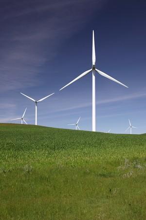 stark: Stark white power generating wind turbines behind green cattle pasture, wheat fields, and blue skies.