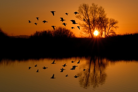 Reflection of Winter Evening Duck Flying over Wildlife Pond, San Jaoquin Delta, California Flyway