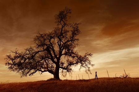 冬には、サンセット、サンホアキン谷カリフォルニアの裸のオークの木のシルエット (プラモデル)