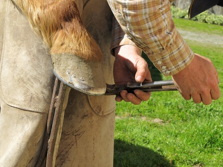 clinch: Blacksmith, or equine farrier, clinches the horse shoe nails to a horse Stock Photo