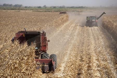 california delta: Combine harvesting corn, San Joaquin Delta, California. Stock Photo