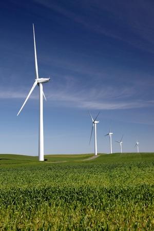 wind turbines: White power generating wind turbines on field of green wheat.