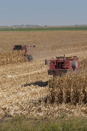 combine: Combines harvest dry corn.