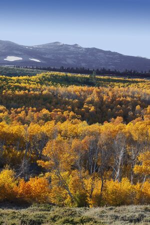 Blue Ridge Mountains: Mountains and glowing aspens, Fall, Eastern Sierra Nevada, California