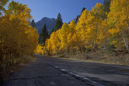 Mountain highway and aspens, Fall, Eastern Sierra Nevada, California Stock Photo - 11812794