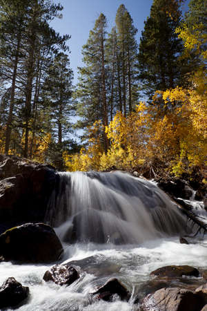 Orange leaves, waterfall, timber, Autumn, Eastern Sierra Nevada, California photo