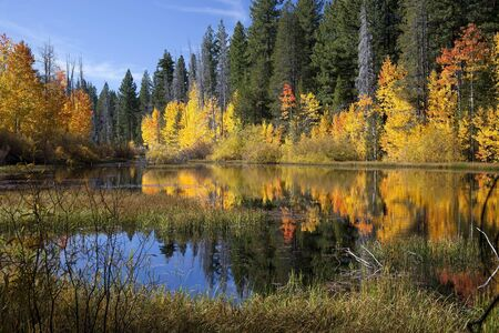 western usa: Reflection of timber and aspens, Fall, Eastern Sierra Nevada, California