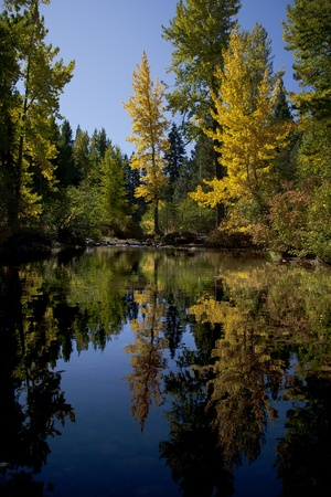 lake tahoe: Reflection of timber and aspens, Fall, South Lake Tahoe, California Stock Photo