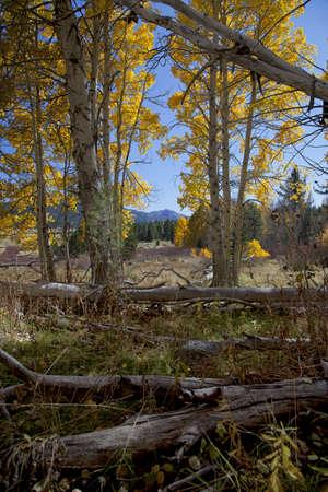 Mountains, meadow, and aspens, Fall, Eastern Sierra Nevada, California Stock Photo - 11812795