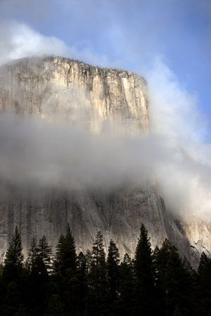 el capitan: El Capitan and silhouetted pine trees, in clouds, Yosemite Valley National Park