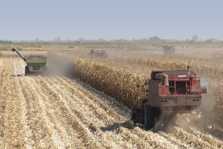 Combine harvisting corn, San Joaquin Delta, California. Stock Photo