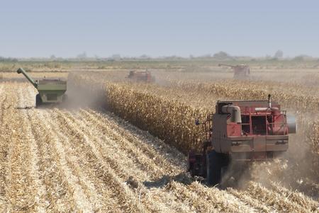 california delta: Combine harvisting corn, San Joaquin Delta, California. Stock Photo