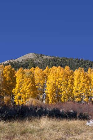 Mountains and aspens, June Lake Loop, Fall, Eastern Sierra Nevada, California photo