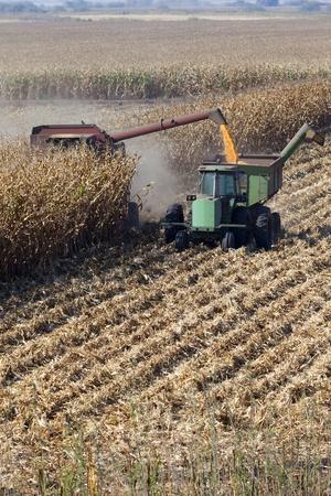 san joaquin: Combine harvisting corn, San Joaquin Delta, California. Stock Photo