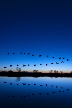 Reflection of Canadian geese flying over wildlife refuge on a blue evening, San Joaquin Valley, California Stock Photo