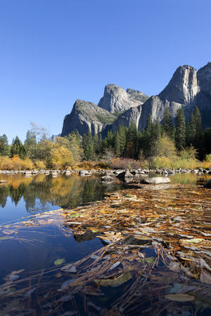 merced: Fall leaves log jammed on the Merced River, Yosemite National Park, Three Brothers , perfect blue sky day. Stock Photo