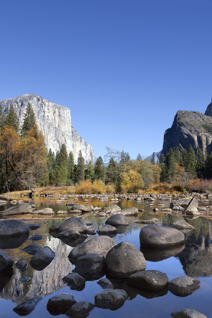 el capitan: Fall on the Merced River, Yosemite National Park, reflection of El Capitan , perfect blue sky day.