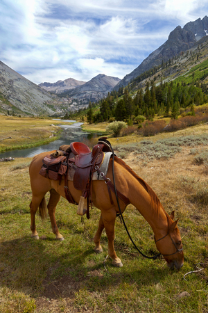 emigrant: Red Dun mountain horse under saddle, saddle bags, rain slicker, Summer, Emigrant Wilderness, Stanislaus National Forest, California Stock Photo