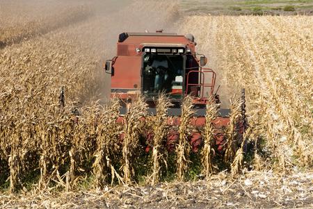 Combine harvesting corn, San Joaquin Delta, California