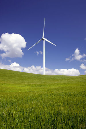 Stark white power generating wind turbine, under Spring blue sky and white clouds, behind a field of green agricultural wheat