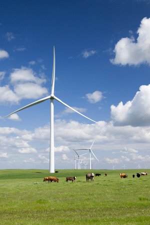Stark white power generating wind turbines, under Spring blue sky, behind a field of green pasture, range cattle, California