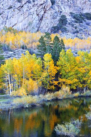 Autumn Aspen Trees beneath rugged granite, morning light, June Lake Loop, Sierra Nevada, California  Stock Photo