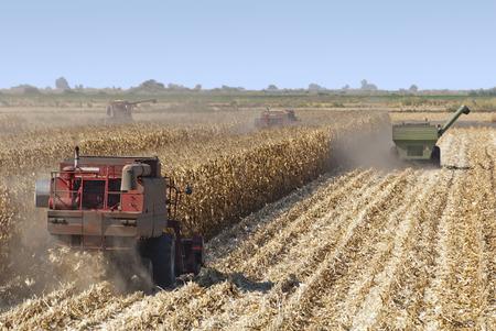 Combine harvisting corn, San Joaquin Delta, California. Stock Photo