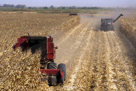 Combines harvisting corn, San Joaquin Delta, California. Stock Photo