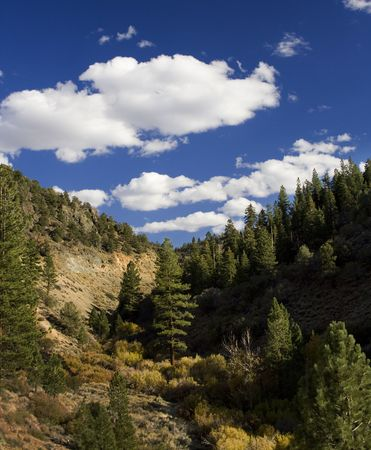 Blue sky with mountain canyon and tree in the center.