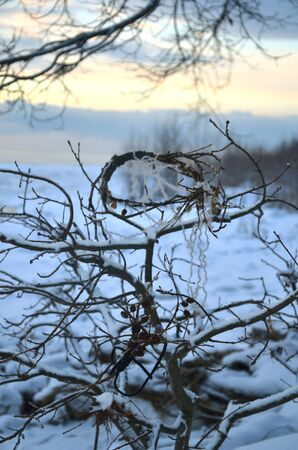 icily: wreath on branches, sunset of a winter day, early winter twilight, a wreath on a low tree