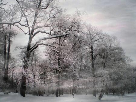 blizzard and winter twilight Stock Photo