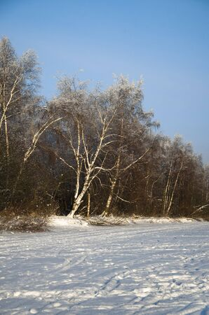 icily: view of snow-covered winter forest from the ice of the river on a nice day